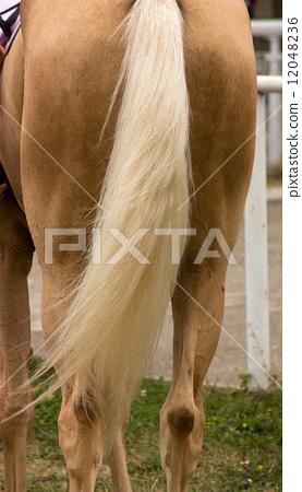 Horsetail 12048236