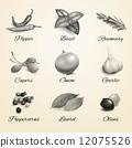 herb, garlic, spice 12075526