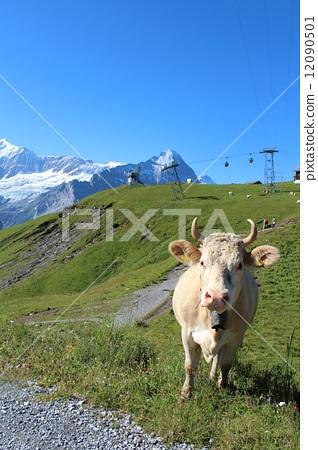 Caw high mountain meadow. 12090501