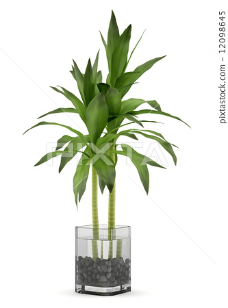 Bamboo Plant In Vase Isolated On White Background Stock