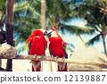 perch, parrots, sitting 12139887