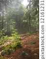 ป่า,ตอนเช้า,เช้า 12161231