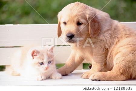 Stock Photo: puppy, pussy, kitty