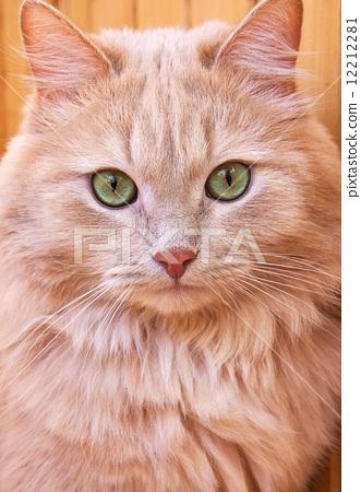 Red Cat 12212281
