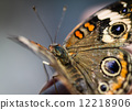 wing, macro, insect 12218906