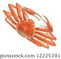 crab, crabs, aquarelle 12225391