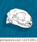 頭骨 向量 向量圖 12231851