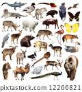 mammal, wildlife, fauna 12266821