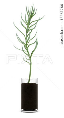 houseplant in glass pot isolated on white background 12281286