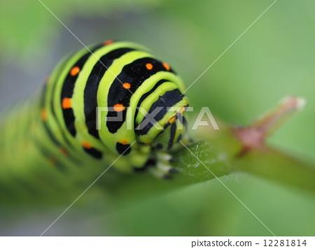 caterpillar, worm, larva 12281814