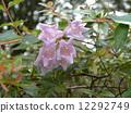 一朵芬芳的阿比利亞白花盛開從春天到秋天 12292749
