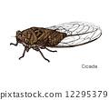 昆蟲 蟬 向量 12295379