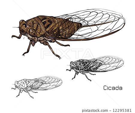 Drawing of cicada 12295381