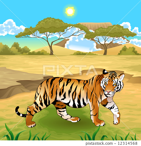African landscape with tiger. 12314568