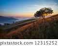 majestic, mountain, sun 12315252