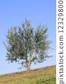 树 树木 树栖 12329800