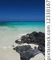 Beach on Hawaii Island 12330167