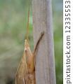 ปู grasshill สีน้ำตาล (หัว) 12335553