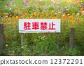 禁止停車 簽字 標誌 12372291