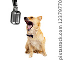 Spitz dog on white background 12379770