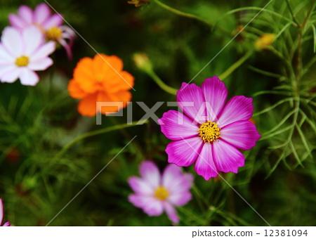 작은 꽃 11 12381094