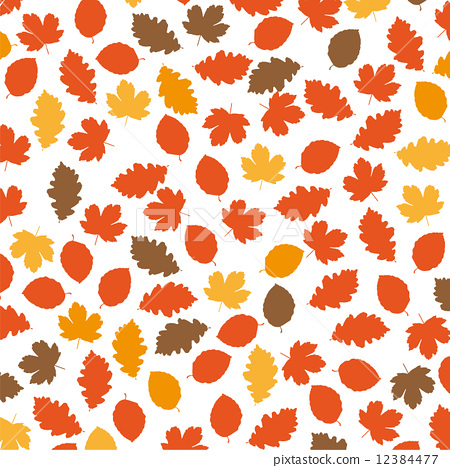 Autumn Foliage 12384477