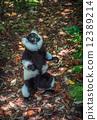 madagascar, lemur, white 12389214