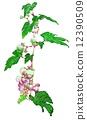 Wild grapes 12390509