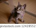 一隻小貓 12428552