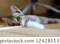 一隻小貓 12428553