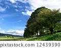 느티, 나무, 가로수 12439390