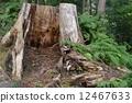 树 树木 树栖 12467633