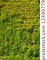 잎, 녹색, 신선한 12490779