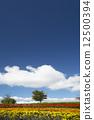 ดอกไม้บานเต็มที่,ท้องฟ้าเป็นสีฟ้า,เมฆ 12500394