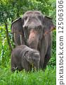 แม่,ป่า,เด็ก 12506306