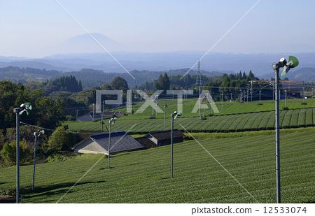 Tea garden in a pastoral aqueduct 12533074