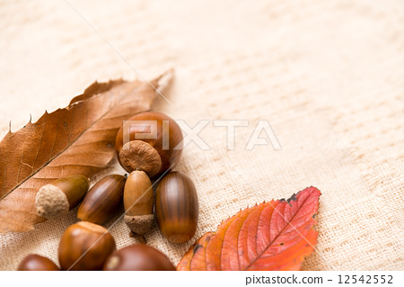 Acorn fall leaves 12542552