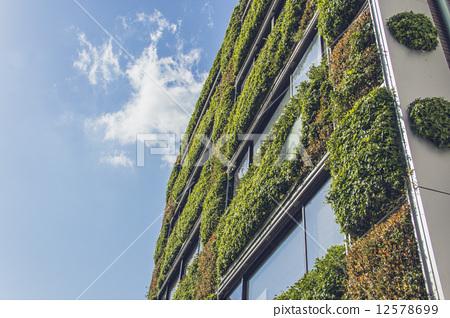 Wall greening 12578699