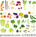 矢量 蔬菜 大白菜 12582859
