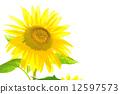 向日葵 太陽花 夏季圖像 12597573