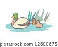 鸭 12600675