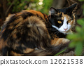 Mitsuko猫午休 12621538