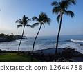 Palm trees and seas 12644788