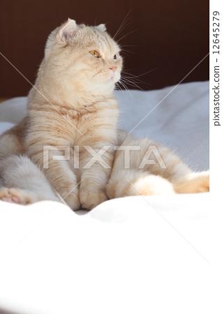 양반 다리를 고양이 12645279