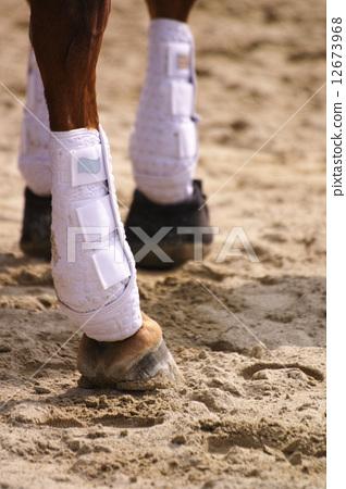 Stock Photo: bandage, paw, hoof