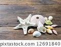 shell, seashell, sea-shell 12691840