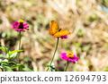 蝴蝶 向日葵 墨西哥 12694793