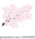 櫻桃樹 12695869