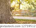다람쥐, 잎, 계절 12739512