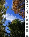 我抬头看着秋天的落叶 12740142